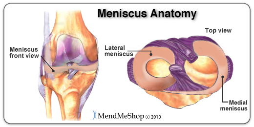 medial-and-lateral-meniscii